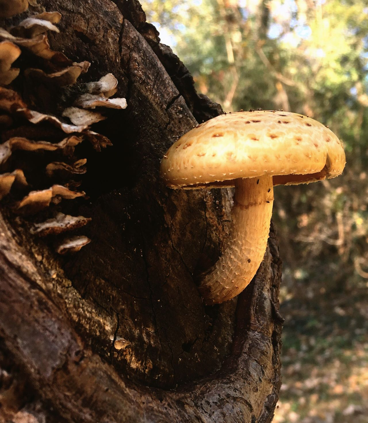 Finding New Frontiers Treetastic Tree Trees And Nature Treelovers Yard Mushrooms Yardpic Mushrooms Fungus Amongus Mushroom On Tree Mushroom Close Ups Mushroom Photography Mushroom Fungus 🍄