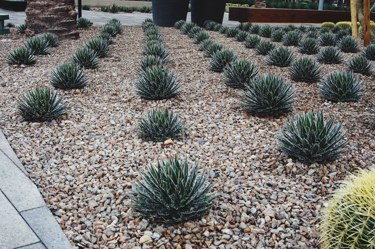 Learn & Shoot: Leading Lines Pixxzo Cactus Landscape Landscape_Collection Linear Perspective