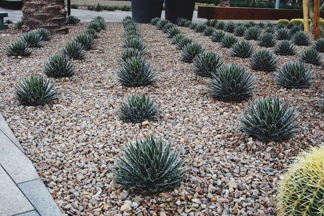 Learn & Shoot: Leading Lines Pixxzo Cactus Landscape Landscape_Collection Linear Perspective