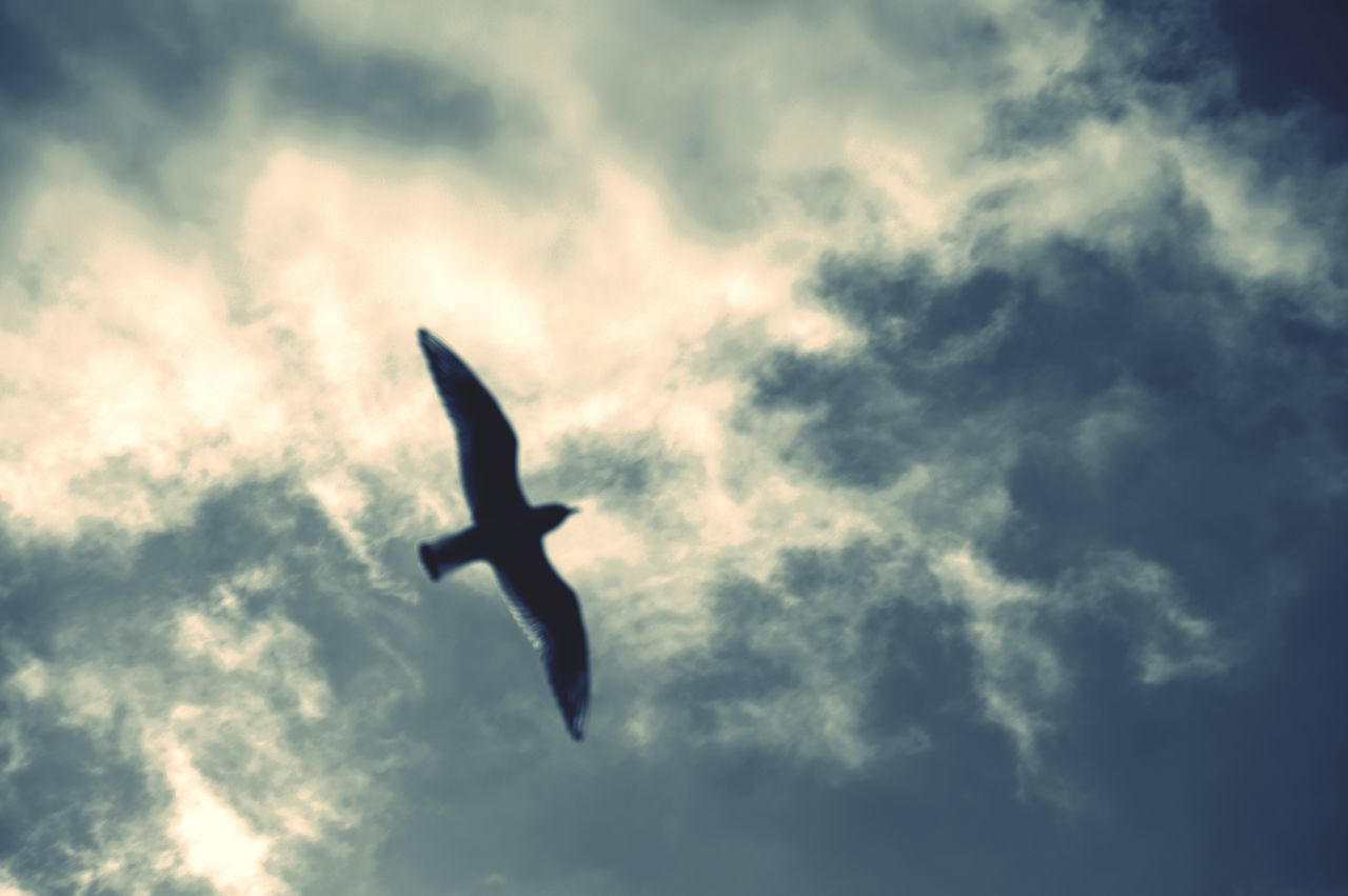 Flying Sky Low Angle View Cloud - Sky Outdoors No People Nature Airplane Day Beauty In Nature
