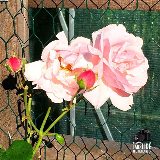 Pictureoftheday Taking Photos Nature On Your Doorstep Nature_collection Awesome Flower Collection