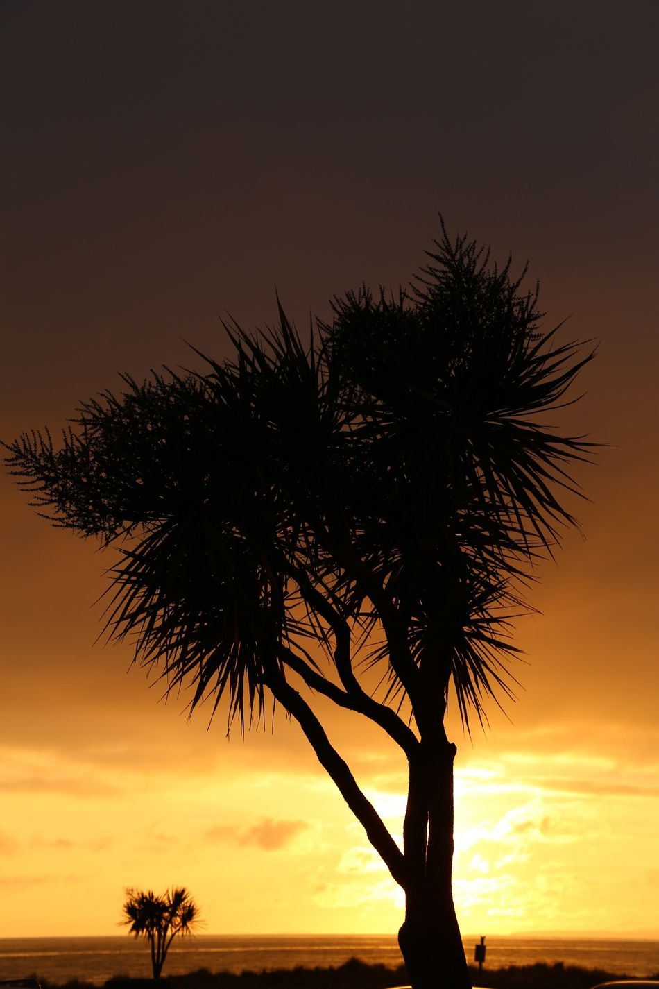 gone too soon Sunset Tree Sea Landscape Nature Tranquility Silhouette No People Outdoors Water Scenics Single Tree Sky Day Silhouettes Of Trees Silhouette Burning Sunset Beach Life Sunset✨trees✨ Sunset Silhouettes Sunsetlover