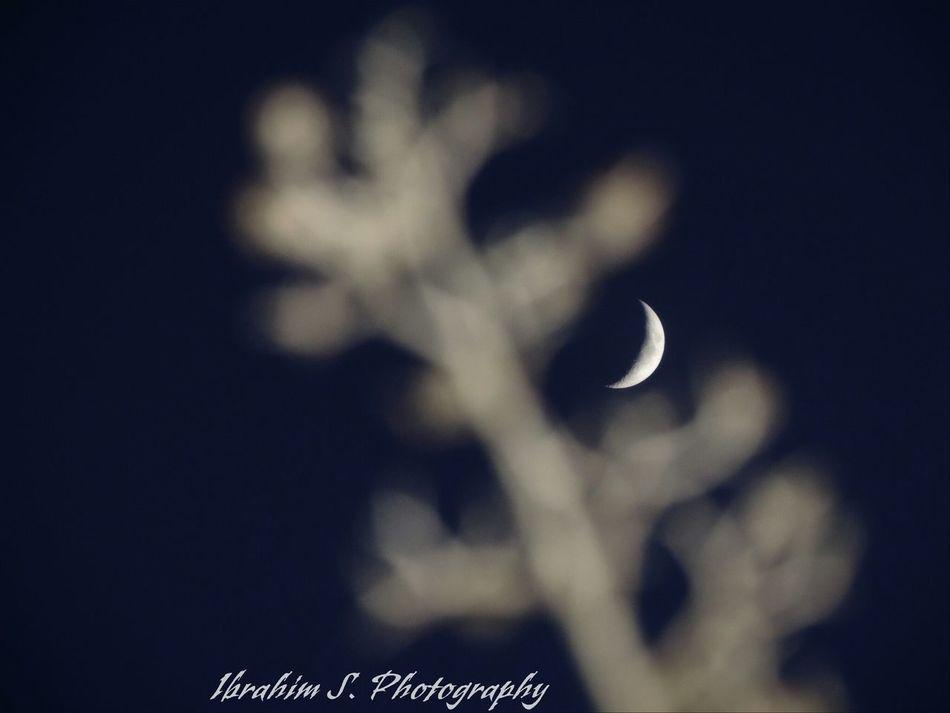 Cresent Moon Moon in the Night Sky Night Ibrahim S Photography