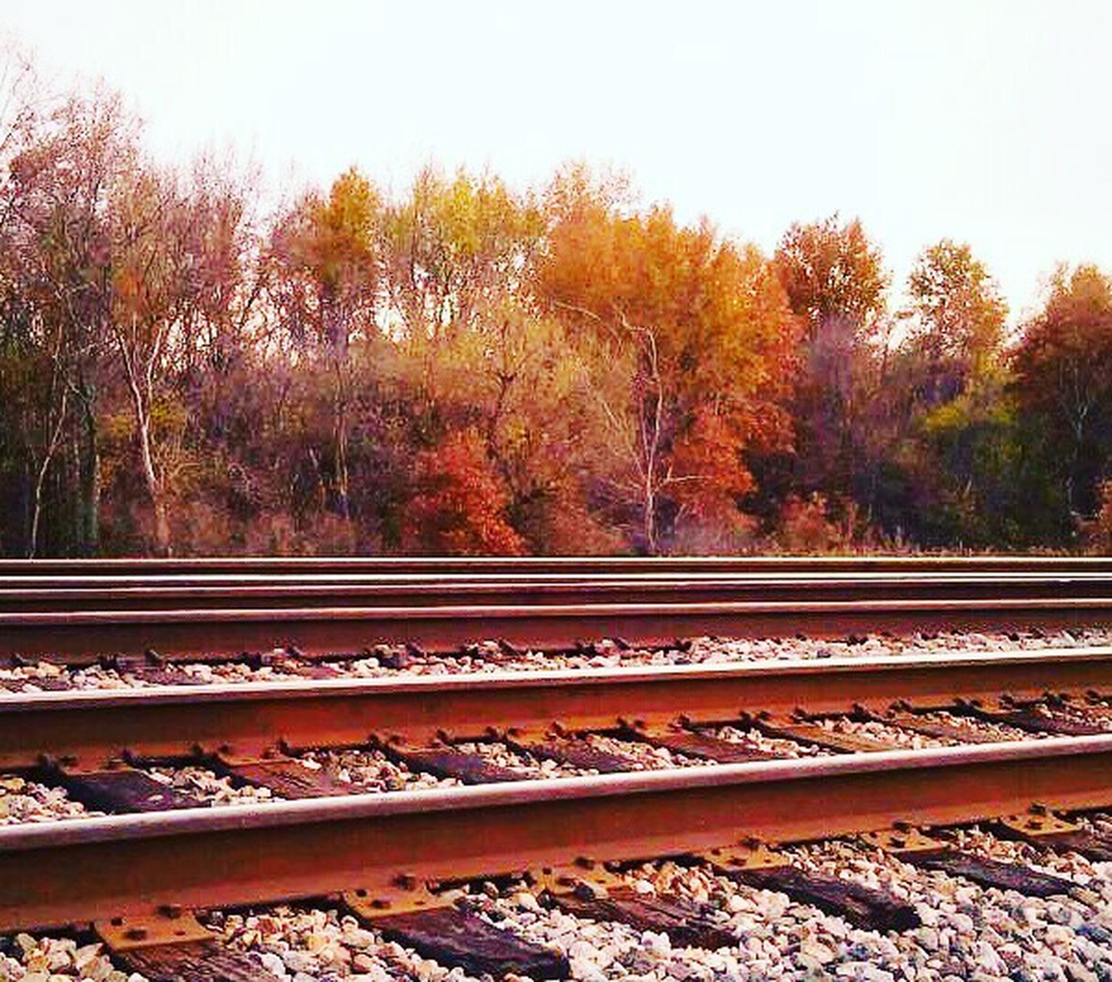 tree, change, rail transportation, railroad track, autumn, bench, nature, outdoors, transportation, no people, day, beauty in nature, sky