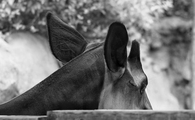 Alert Nature Blackandwhite Light And Shadow Eyem Best Shots Monochrome EyeEm Best Shots Eye4photography  Blackandwhite Photography Eye Em Best Shots EyeEm Nature Lover