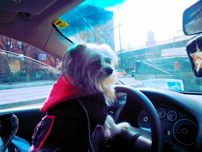 Driving To The Office