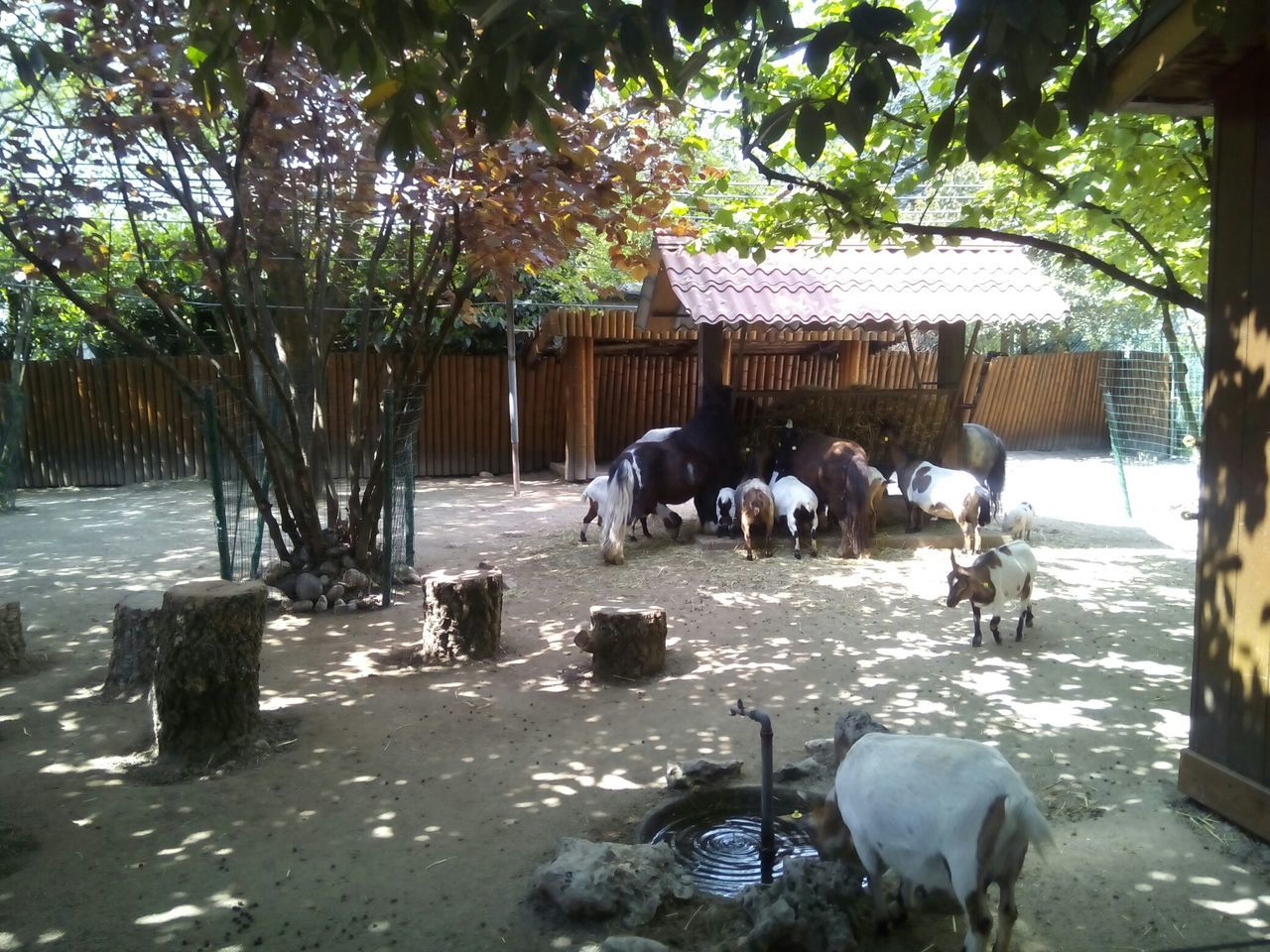 animal themes, tree, mammal, domestic animals, day, nature, outdoors, large group of animals, livestock, no people, togetherness, water