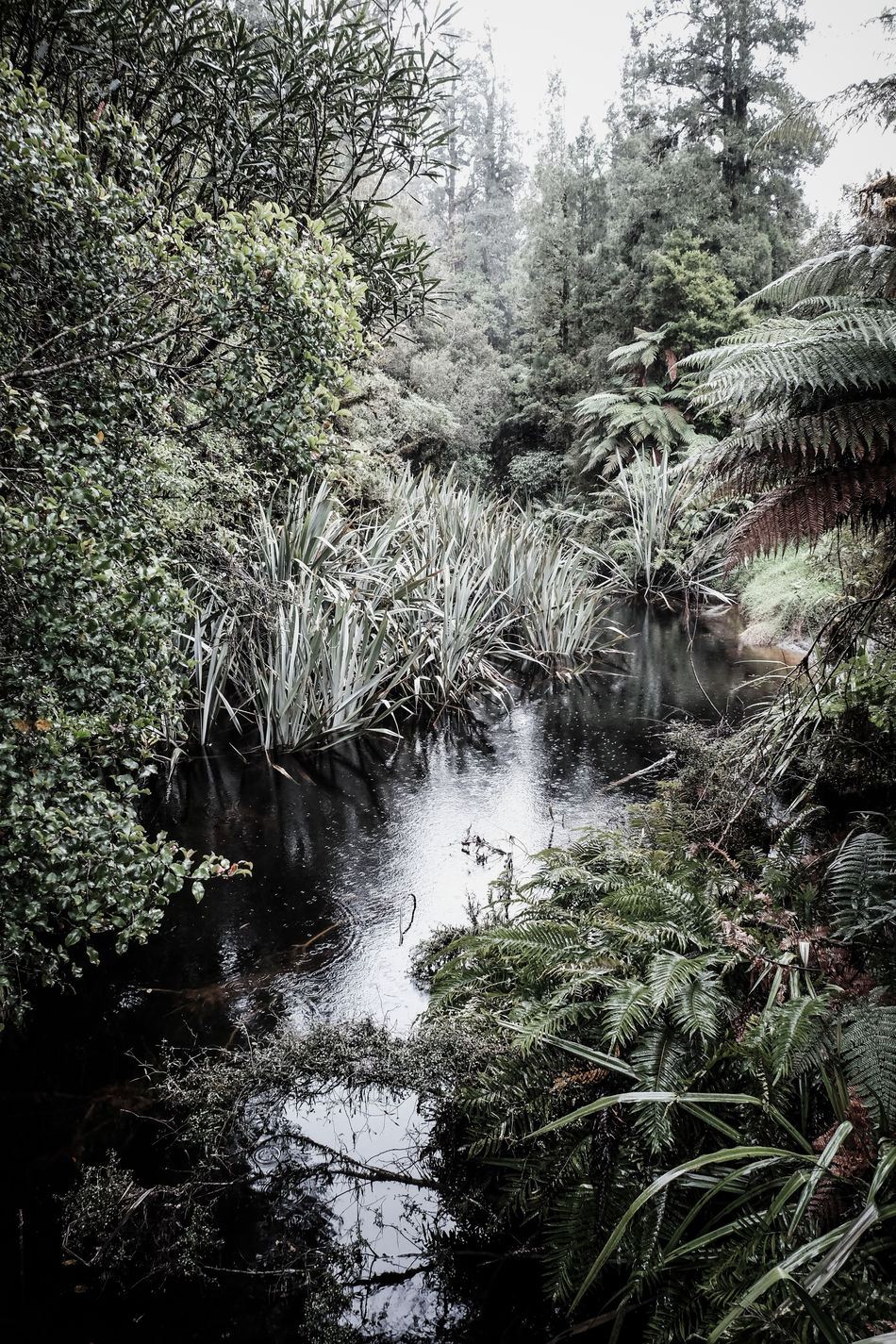 Beauty In Nature Ferns Flowing Water Forest Fox Glacier FUJIFILM X-T1 Green Growth New Zealand New Zealand Beauty New Zealand Impressions New Zealand Scenery No People Outdoors Pond Raindrops Raining Rainy Days River Scenics Tranquility Untouched Untouchednature Water Plant Water Plants