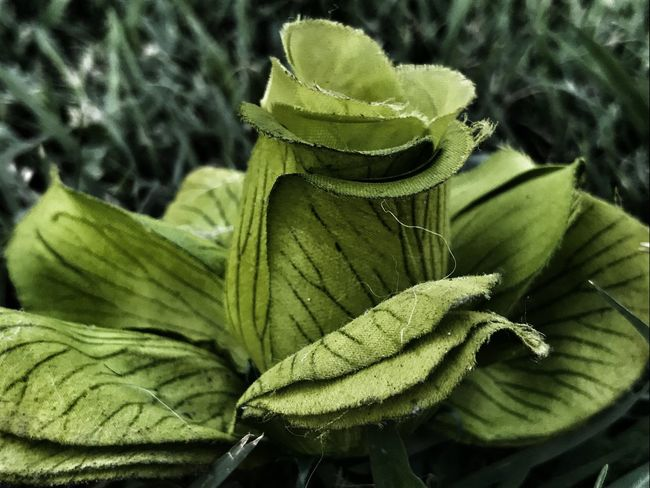 🍀🌿🍃 Growth No People Nature Leaf Plant Beauty In Nature Green Color Outdoors Freshness Day Close-up