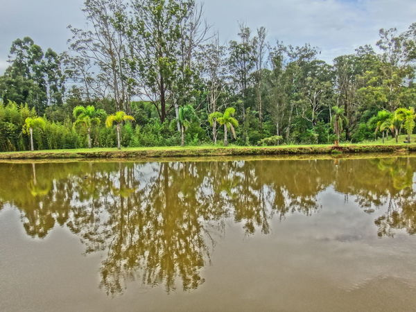 Beauty In Nature Distant Forest Geometry Green Green Color Horizontal Symmetry Lake Lakeshore Lush Foliage Nature Outdoors Reflection Relaxing Moments Scenics Standing Water Symmetry Tranquil Scene Tranquility Tree Tropical Climate Water