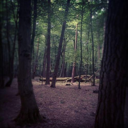 Enlightened Kanary Forrest Warszawa  Polska