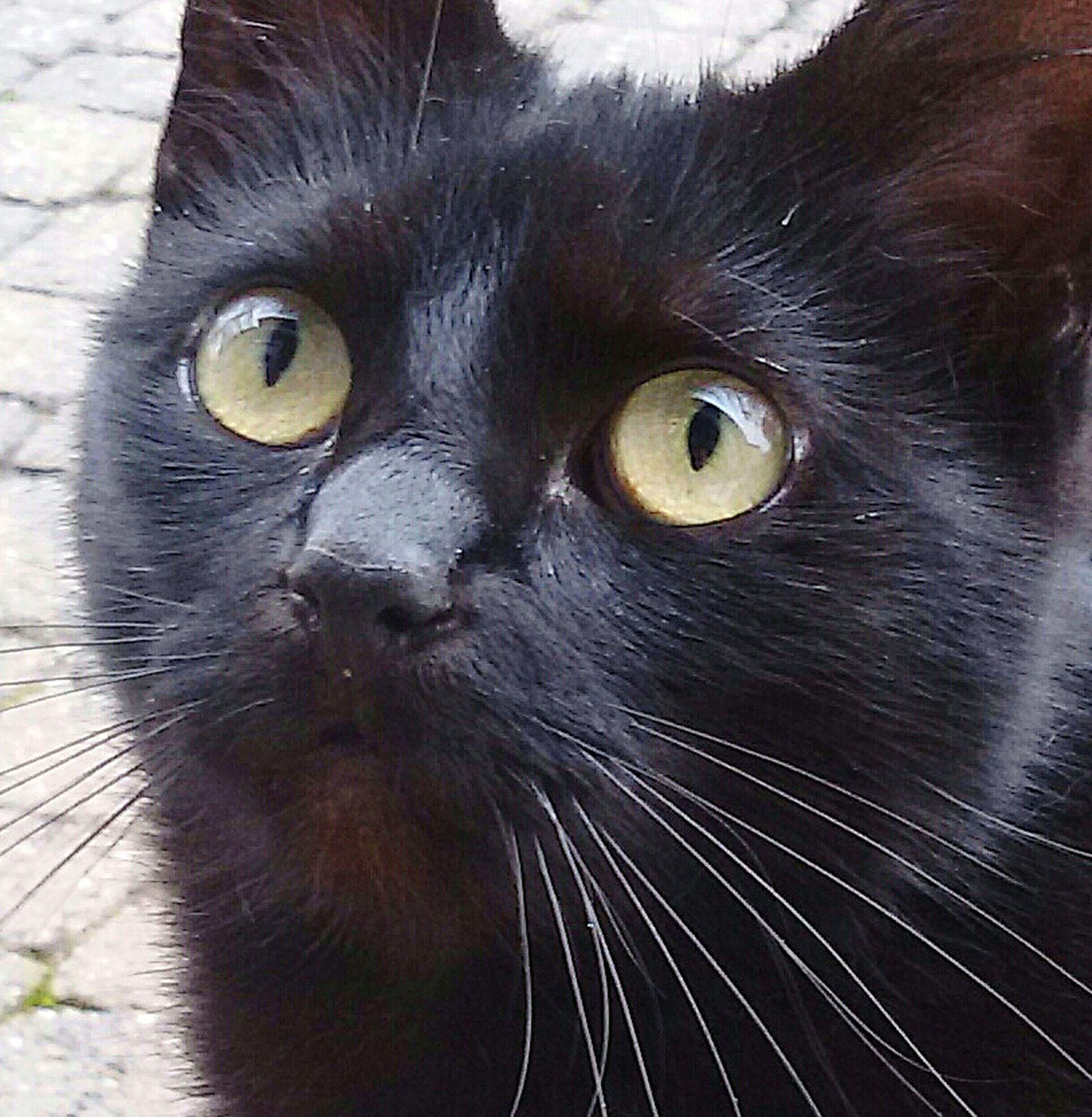 Hello World Taking Photos Eyeemanimal Lover My Neighbour  Cats Black Cat To Visit 🐱