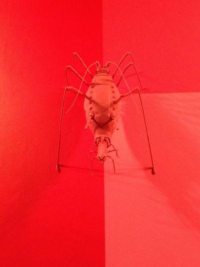 Art Carsten Höller Wall Insect Red London