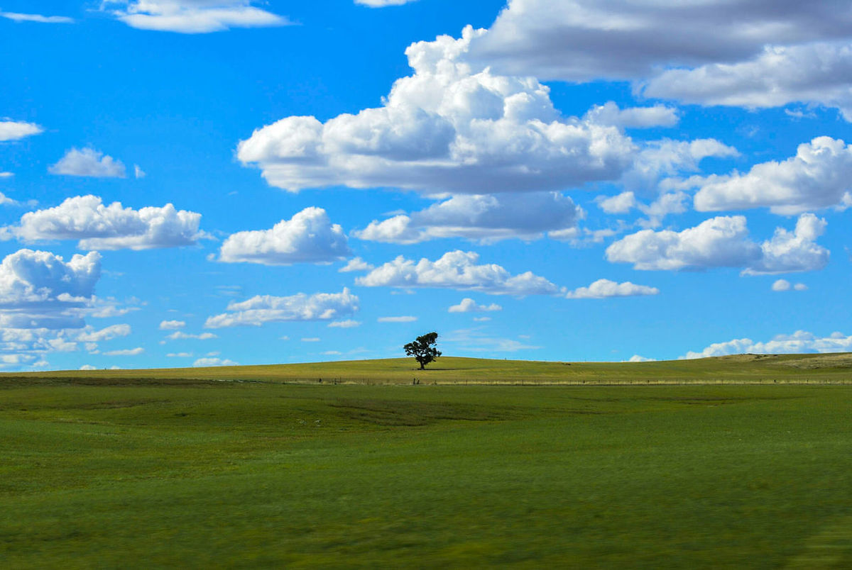a single tree on the edge to australias desert! taken out of a driving carCloud - Sky Beauty In Nature Travel Destinations Australia Summer Beauty In Nature Sky Silhouette EyeEmNewHere Lonley Tree Tree And Sky Single Tree Single Tree On A Hill