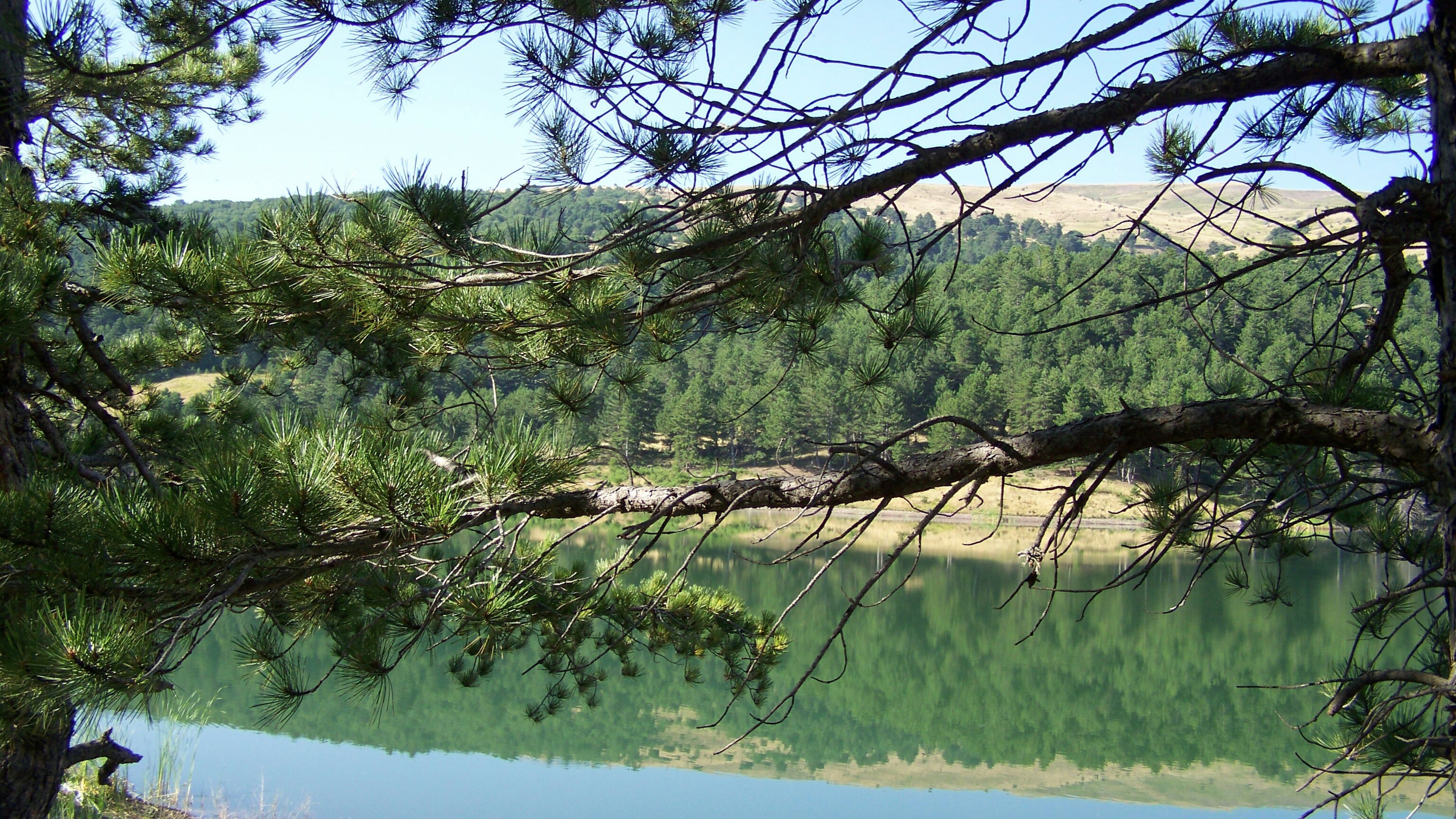 tree, water, tranquility, growth, tranquil scene, branch, nature, scenics, beauty in nature, plant, green color, clear sky, lake, river, day, idyllic, reflection, landscape, forest, outdoors