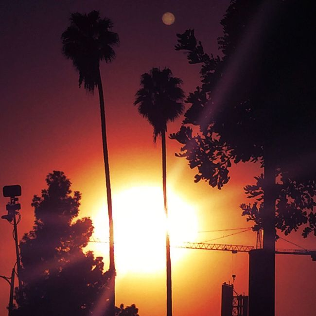 This city never sleep, it's time to began isn't it? -Los Angeles, Hollywood Blvd Sunset Sky Palm Tree Beauty In Nature Orange Color First Eyeem Photo