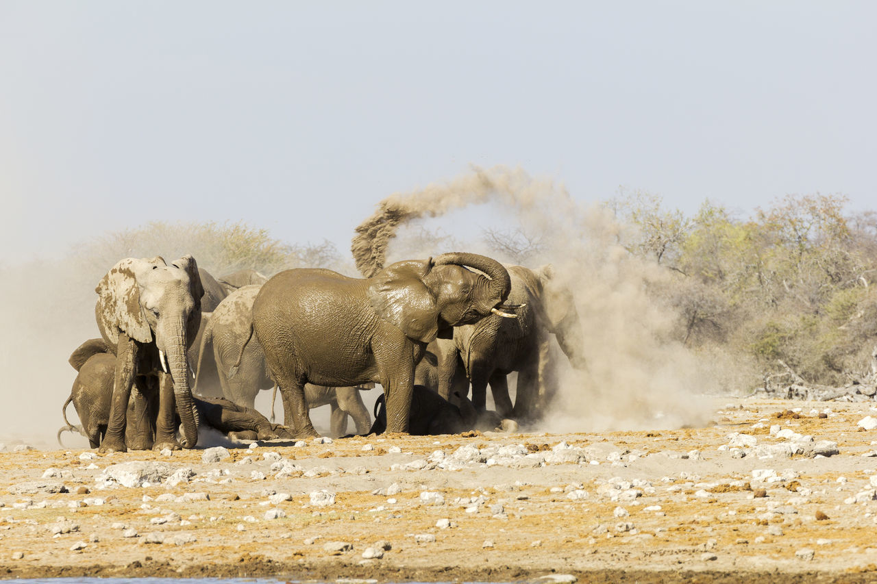 Beautiful stock photos of elefant,  Animal Wildlife,  Animals In The Wild,  Clear Sky,  Copy Space