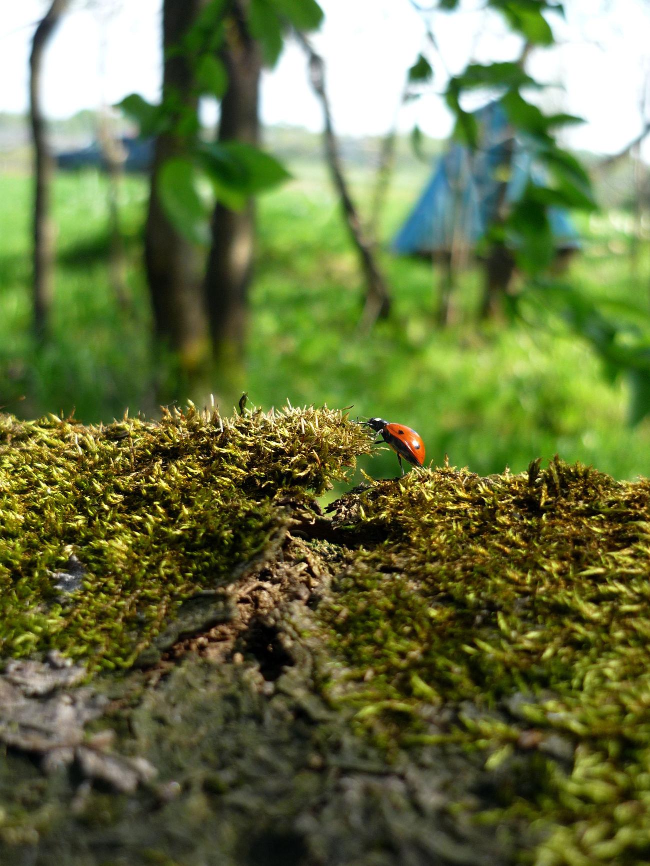 Сила божьякоровка Воля зелень  Лес лето насекомое Природа сила