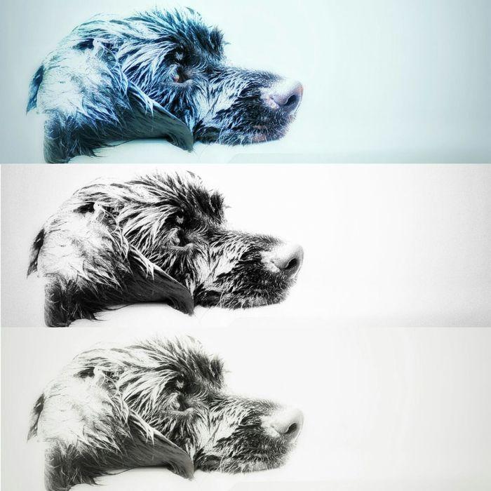 Cannon EOS Rebel XT Riverside, Texas Texas Animal Daytime Photography Dog Dog Bath