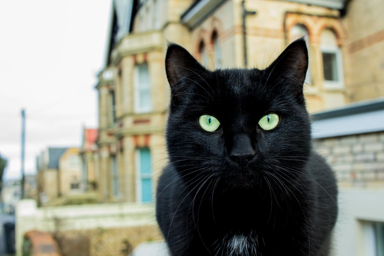 La Black Cat! Animal Themes Architecture Black Cat Black Color Building Exterior Built Structure Cats 🐱 Close-up Day Domestic Animals Domestic Cat Feline Focus On Foreground Looking At Camera Mammal No People One Animal Outdoors Pets Portrait Watching Whisker Yellow Eyes