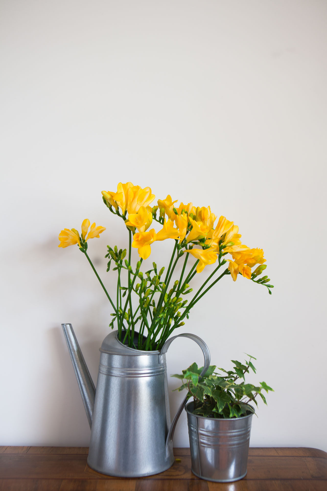 Bouquet Design Flower Flower Head Flower Pot Fragility Freesia Freshness Home Indoors  Ivy No People Plant Studio Shot Vase Yellow
