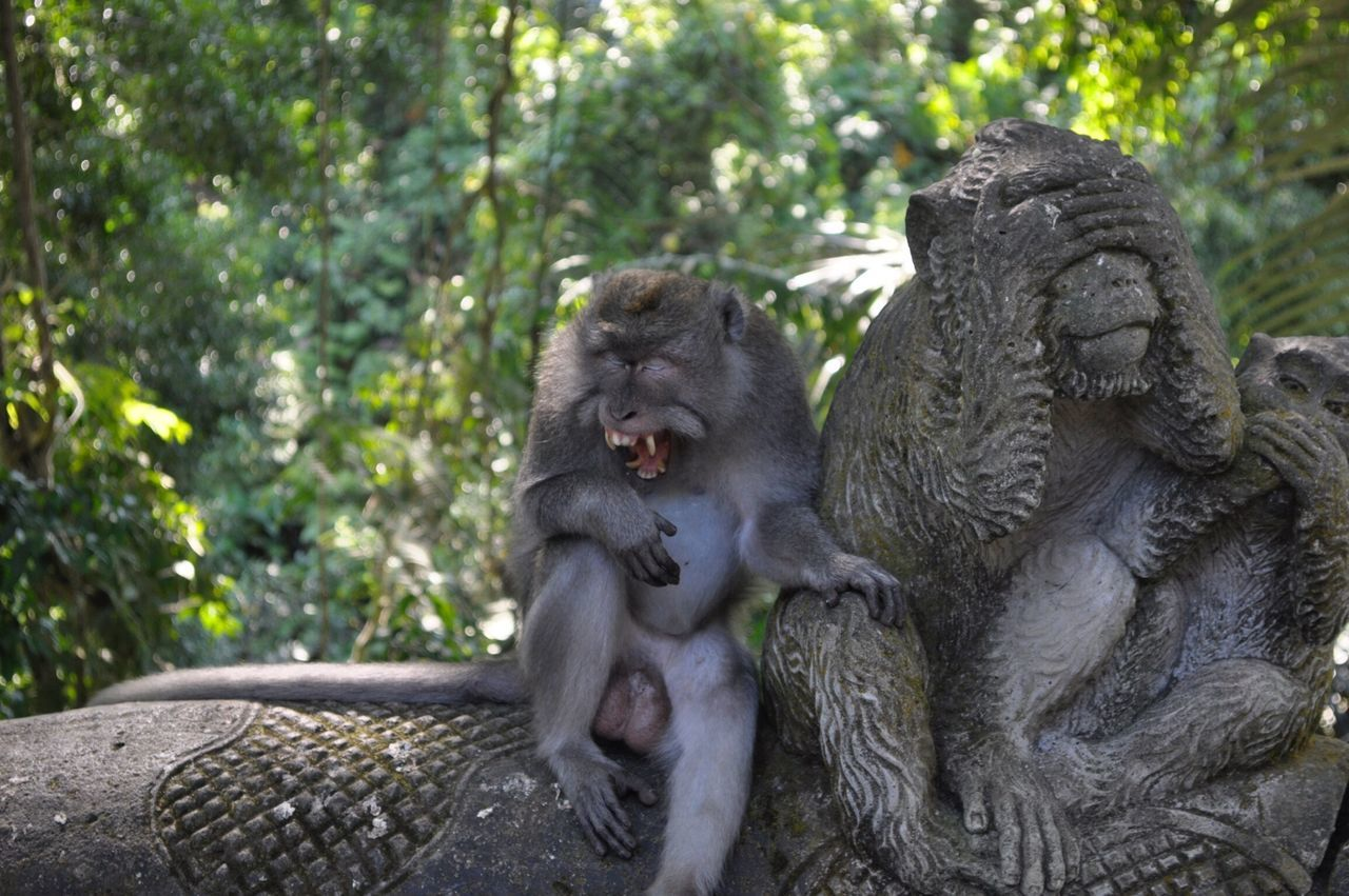 Beautiful stock photos of jungle, Anger, Angry, Animal Representation, Animal Themes