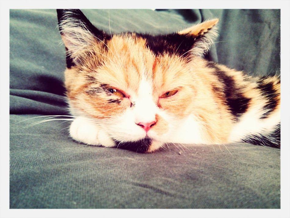 My Cute Cat...