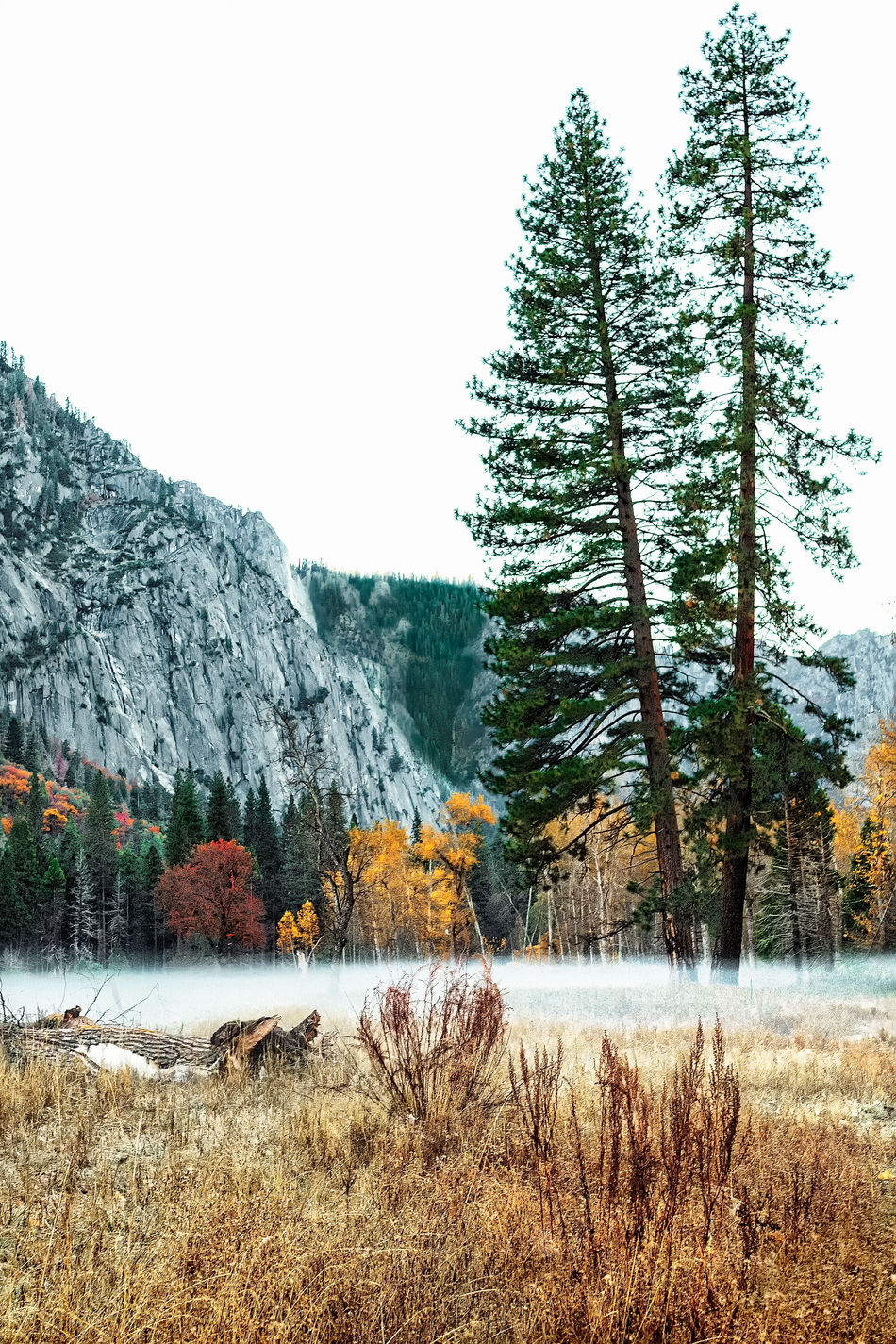 Yosemite National Park in Early Fall 2016. Fog Sits upon the Yosemite Valley floor. Beauty In Nature Clear Sky Day Fog Growth High Definition Lake Lakeshore Landscape Nature No People Non-urban Scene Outdoors Scenics Sky Tranquil Scene Tranquility Tree Trees Water Yosemite National Park