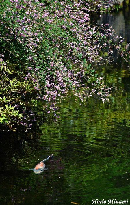 Water Nature Beauty In Nature Japan EyeEmNewHere EyeEm Best Shots EyeEm Team No People 島根県 足立美術館