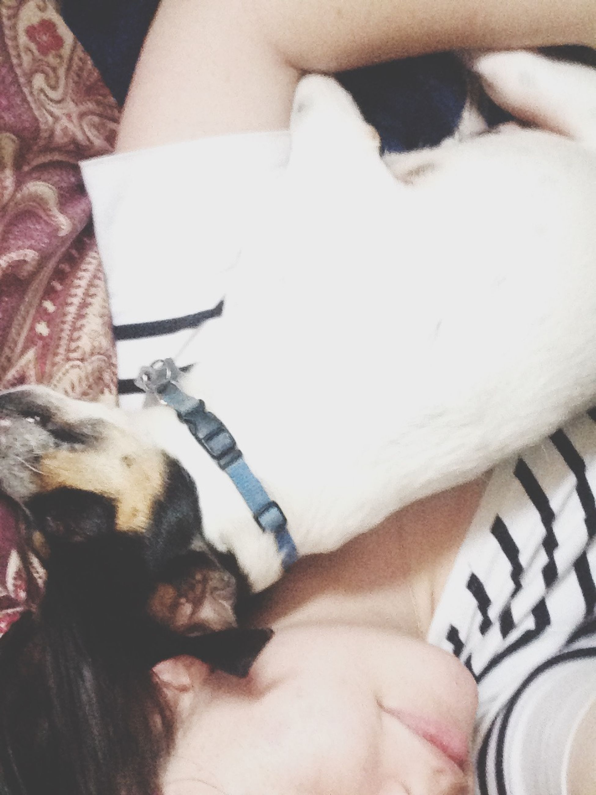person, lifestyles, indoors, togetherness, leisure activity, bonding, relaxation, part of, lying down, love, bed, midsection, home interior, pet owner, cropped