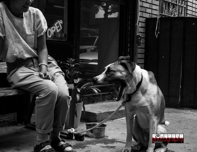 Capture The Moment Dog Love Hellobrooklyn EyeEm Best Shots Canonphotography Check This Out Popular Photos
