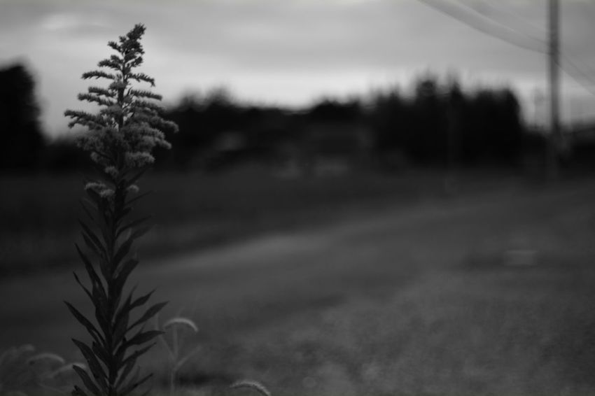 just like me Nature Photography Voigtlnder Voightlander Nokton Classic 40mm/F1.4 SC Fujifilm X-Pro1 My Photography Black And White X-Pro1 Japan Japanese  Black & White B & W  Black And White Photography EyeEm Best Shots - Black + White B & W Photography EyeEm Nature Lover Plants Plants And Flowers Plant