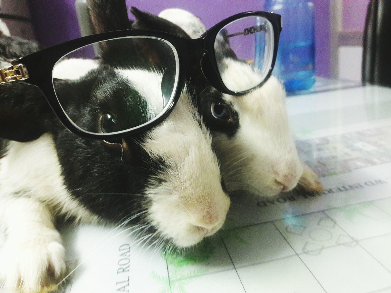 The sweetest pets ever Rabbits 🐇 Changu_mangu First Eyeem Photo