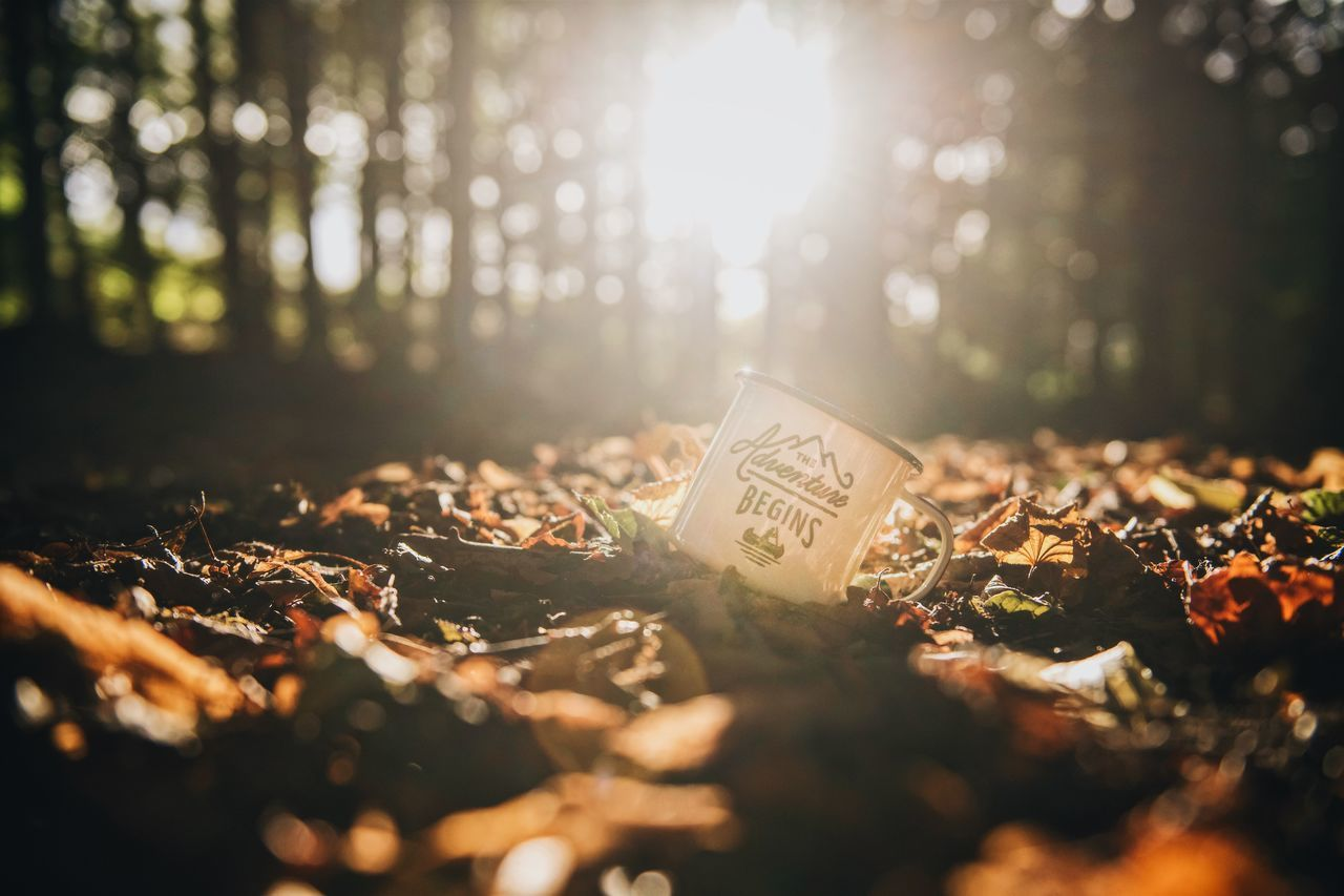 """An enamel mug with the quote """"Let the adventure begin"""" printed on it rest in autumn leaves in the forrest. Adventure Quote Autumn Autumn Colors Autumn Leaves Adventure Autumn Sunlight Enamel Mug Forest Forrest Leaf Let The Adventure Begin No People Outdoors Sunlight"""