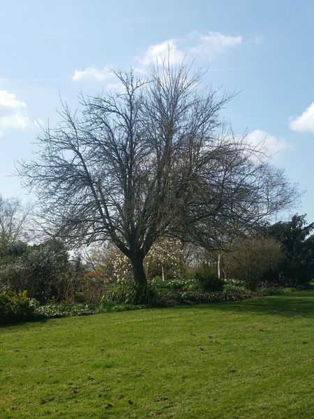 Garden Photography Trees And Bushes Landscape Spring Has Arrived Grass Blue Sky Light Clouds