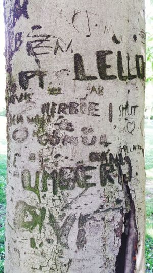 Textured  Text Rough Backgrounds No People Outdoors Tree Scar Scars Nature Nature And Humanity Hurt Writing Writing On The Tree Day