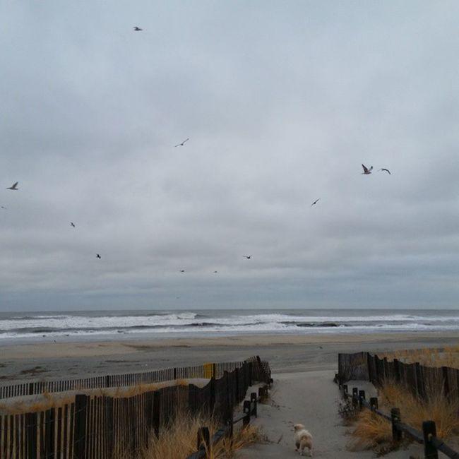 Nofilter Storm Seagulls Seasonchange doac atlanticcity atlantic atlanticocean ocean eastcoast jerseyshore jersey realjerseyshore dogwalk londontime londonharvey mylove littleman joy grateful ilivebeachblock at25 holla mylifeisamazing
