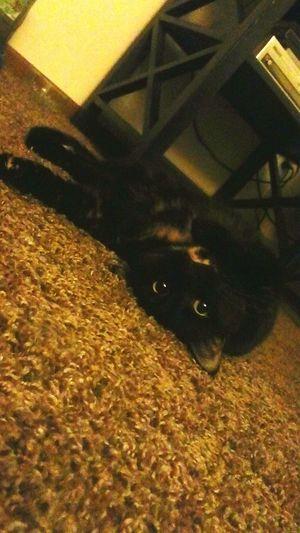 My cat is very strange Strange Cat Pet Mallee Kitty Weirdo Love