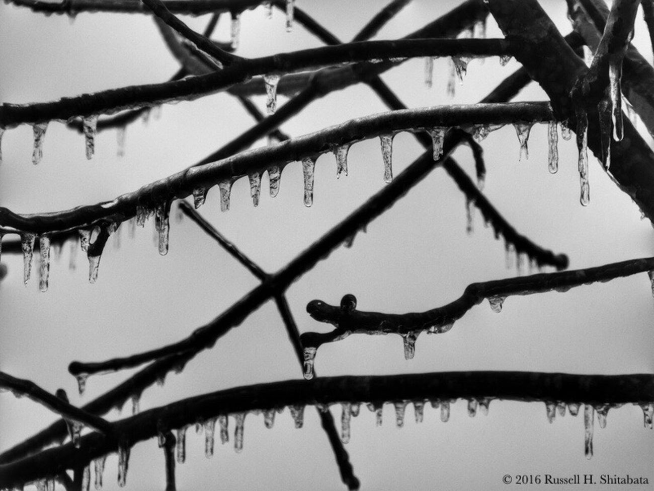 Black And White Photography Bnw_collection Bnw Blackandwhite Black And White Collection  Black And White Bnwphotography Blackandwhitephotography Black & White Monochromatic Blackandwhite Photography Bnw_captures Monochrome Photography Monochrome Black&white Light Light And Shadow Contrast Water Ice Frozen Frozen Nature Freezing Tree Icicles