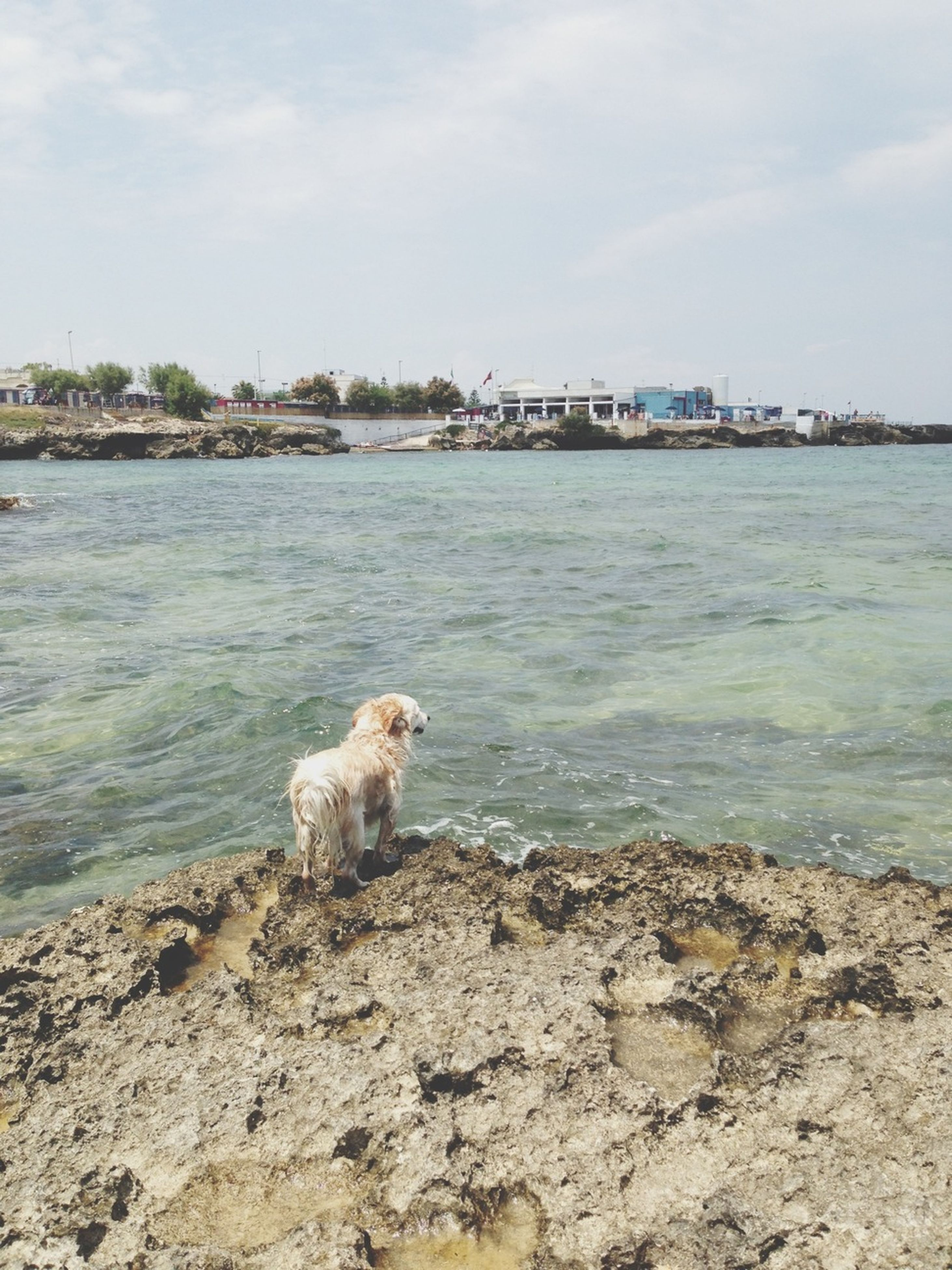 dog, mammal, domestic animals, water, pets, animal themes, one animal, sky, sea, cloud - sky, built structure, sitting, nature, beach, cloud, building exterior, day, shore, relaxation, rock - object