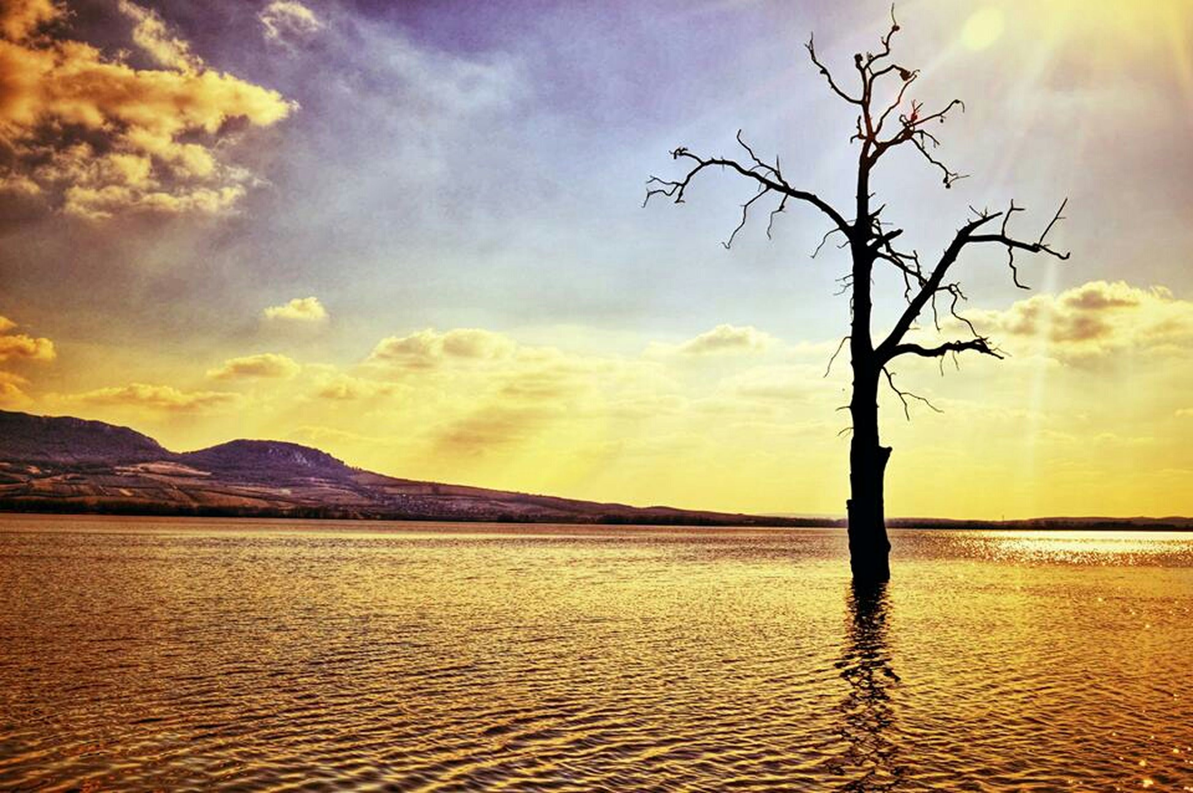 water, sky, sunset, tranquil scene, scenics, tranquility, beauty in nature, cloud - sky, sea, nature, waterfront, cloud, idyllic, rippled, cloudy, tree, silhouette, lake, bare tree, reflection