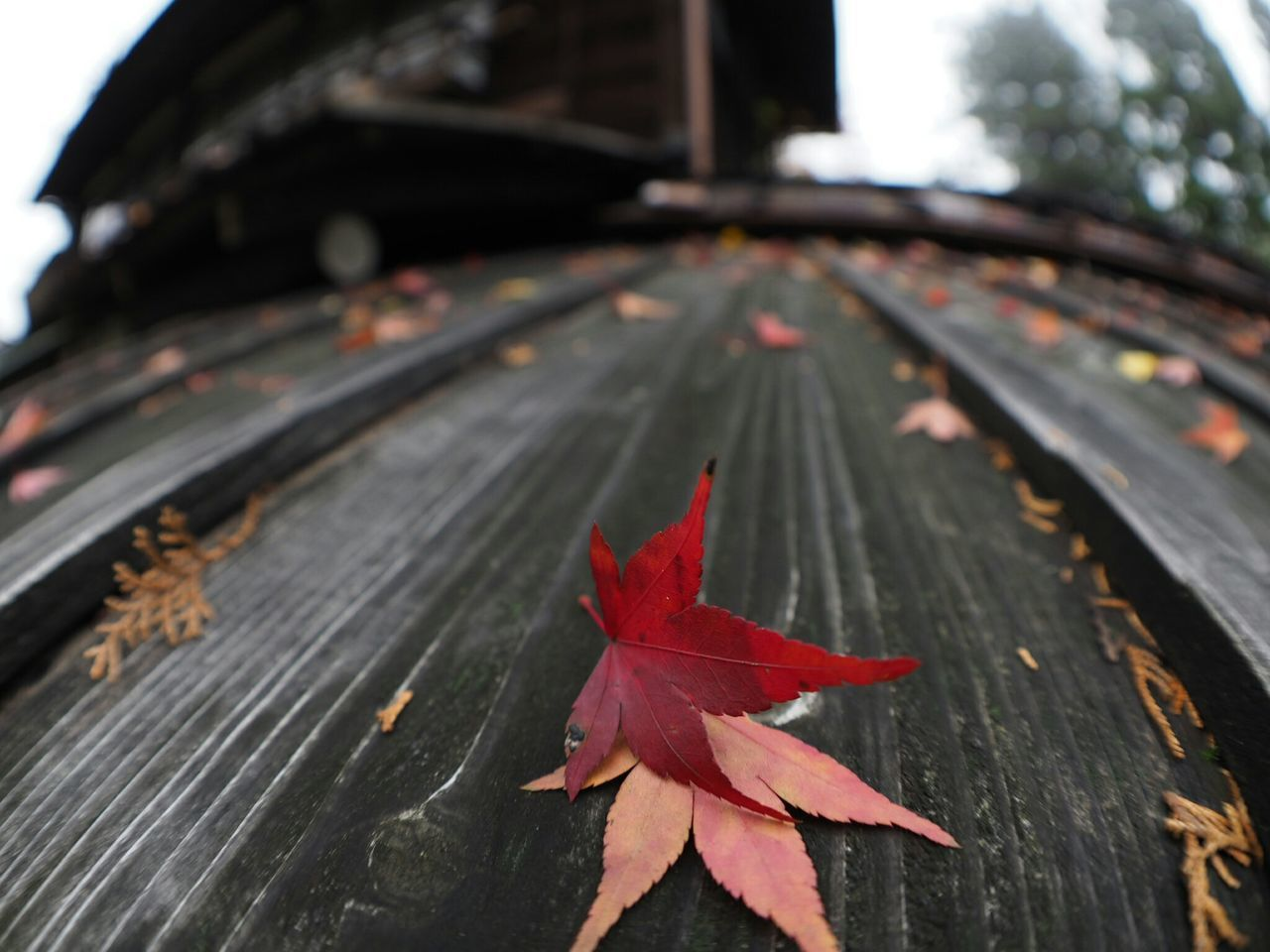 EyeEm Nature Lover From My Point Of View Nature Photography Olympus Om-d E-m10 Japan Photography Relaxing Autumn Taking Photos Autumn Leaves On The Roof The Colors Of Autmn View Old House Walking Around Check This Out
