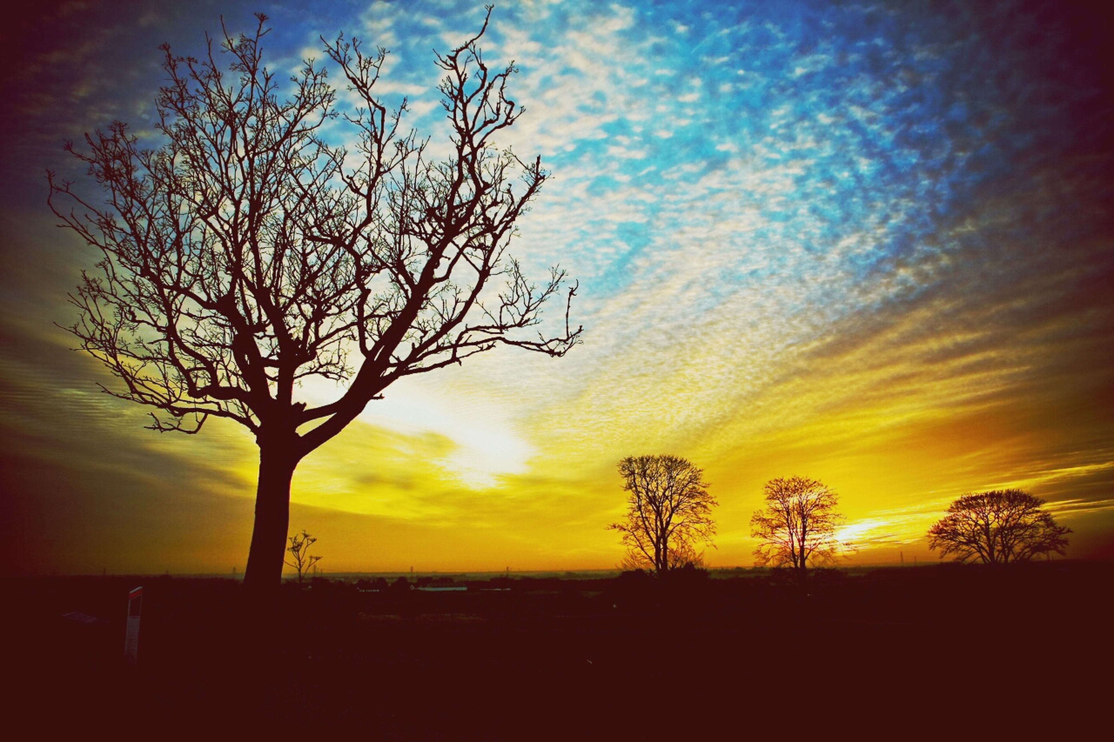 sunset, silhouette, sky, beauty in nature, tranquil scene, tranquility, scenics, tree, bare tree, orange color, nature, cloud - sky, idyllic, landscape, branch, dramatic sky, growth, cloud, field, majestic