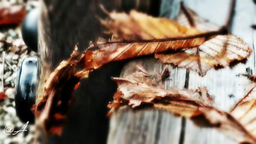 Ascoltami..e mi sentirai...:-) EyeEm Nature Lover Tadaa Community Authentic Moments Leaf