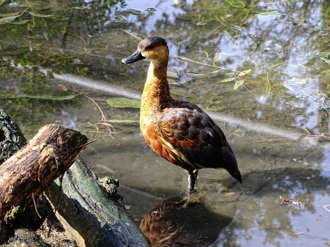 Water Bird Close-up Animal Themes Water One Animal Animal Wildlife Waterfront Outdoors Beautiful