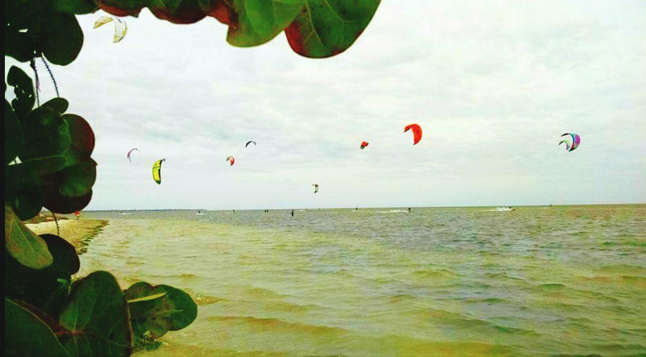 Wind Surfing Windsurfing Windy Kite Surfing Kite Surfers Gulf Of Mexico Sunshine Skyway Bridge Florida Sightseeing Salt Life People Watching Surf's Up Action Shot  Action Sports