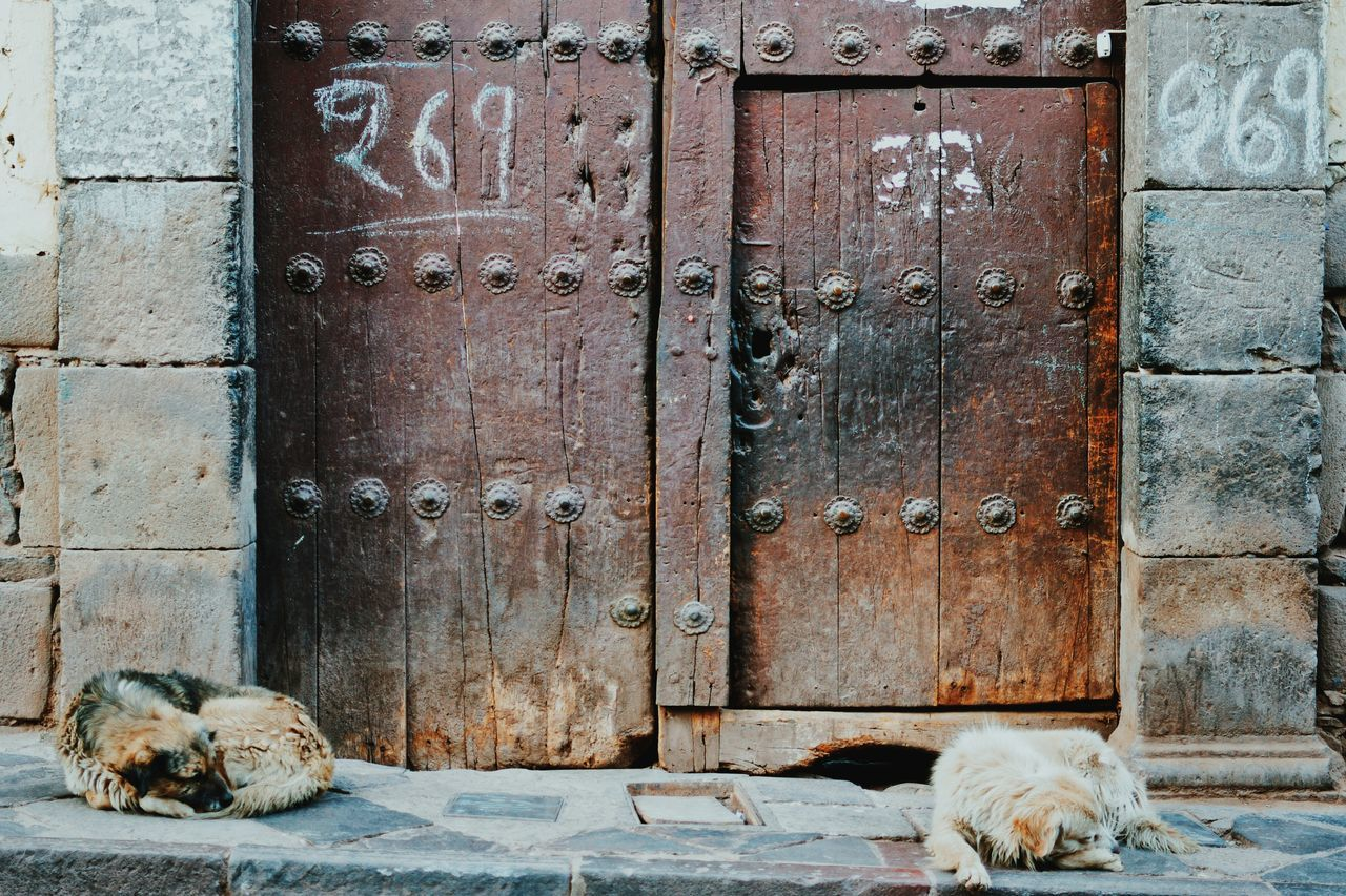 pets, domestic animals, one animal, animal themes, mammal, dog, no people, outdoors, day, domestic cat, architecture