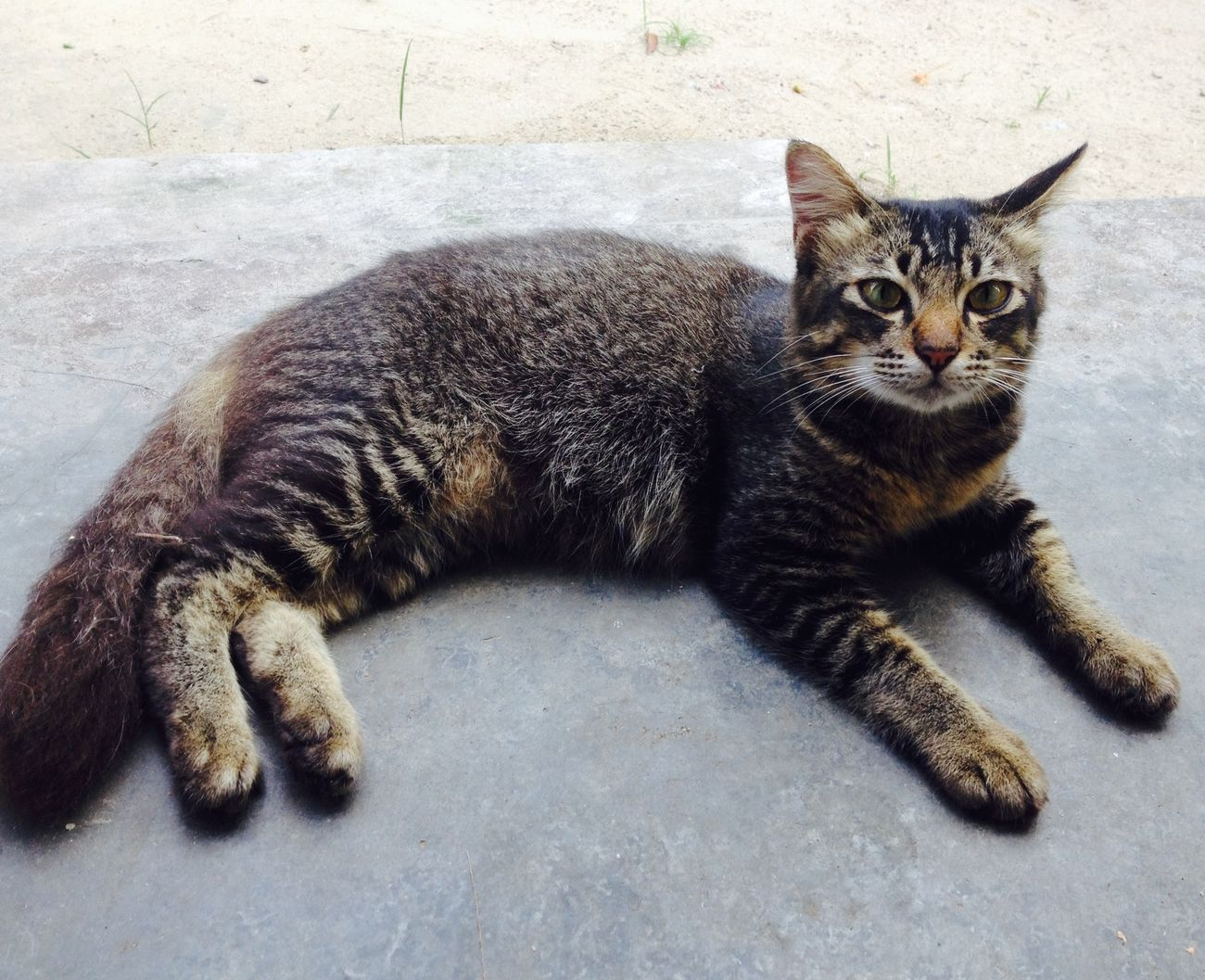 Cat Stray Cat Become Lovely Cat 😽😽 Lazy Day Hot Day
