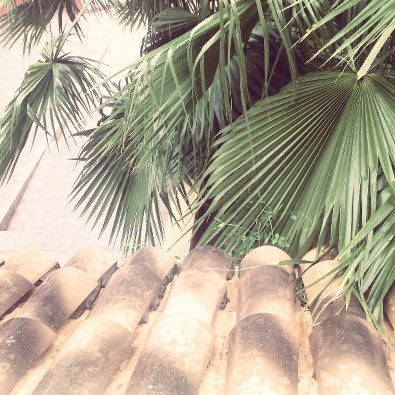 GotaFria en Naquera València ,hoy me quedo sin playa