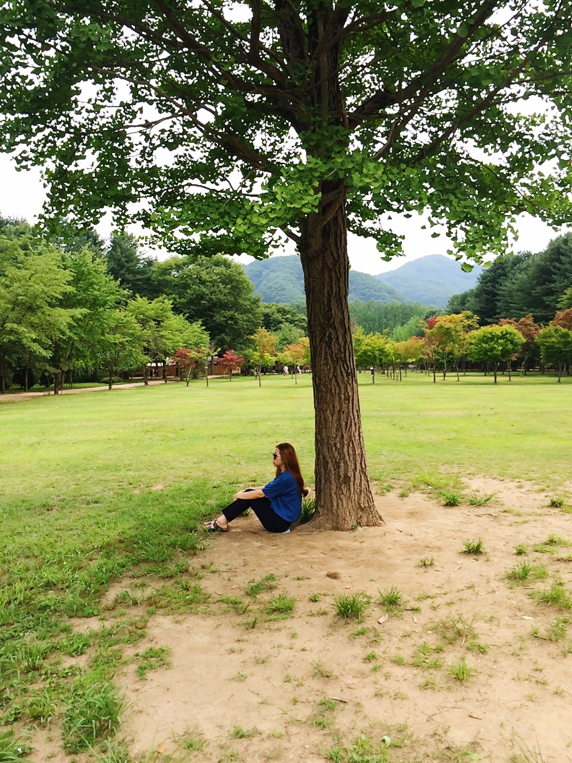 tree, leisure activity, lifestyles, grass, tranquility, rear view, full length, sitting, green color, relaxation, tranquil scene, nature, casual clothing, childhood, growth, landscape, men, person